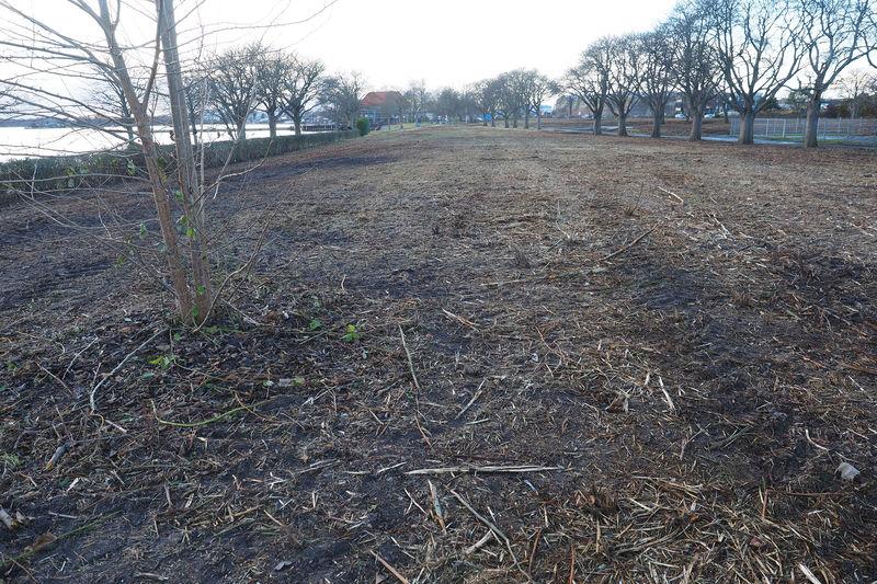 Der Banter See Park nach den Rodungsarbeiten Januar 2021